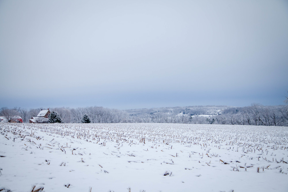 SnowyField02-2016-1.jpg