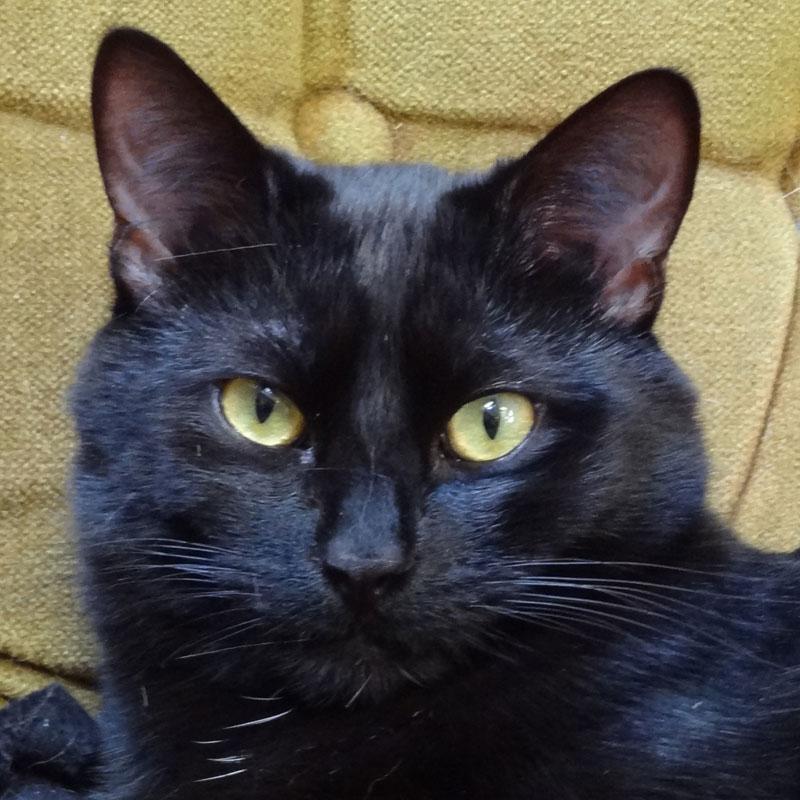 Alphie, our black cat