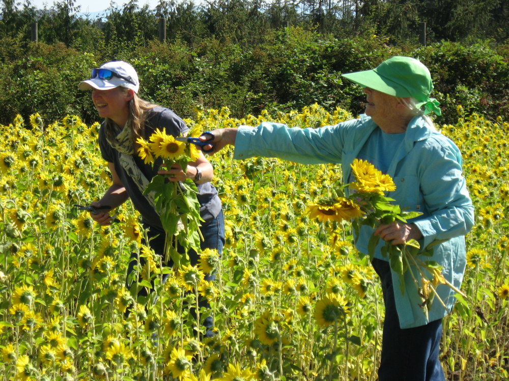 Annie and Ann (Victoria Therapeutic Riding Association - VTRA) enjoying the sunflowers at Newman Farm. VTRA benefits from the feeding apples and carrots from Newman Farm to support therapeutic relationship building and bonding between riders and their horses.