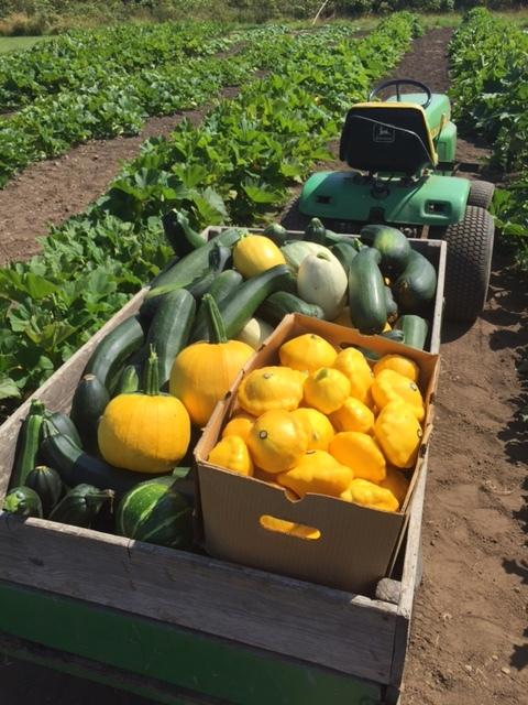 Newman Farm harvest.JPG