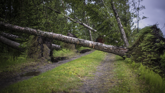Day after the storm. Photo:  Juha Kemppainen / Yle