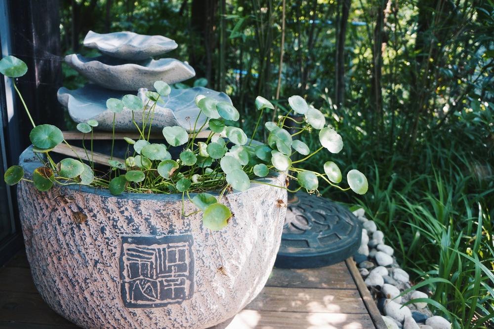 整个院子都被植物,尤其是日式插花覆盖。老板的太太钟爱日式花艺,每年去两次台湾和日本选购植物,自己也开了插花班