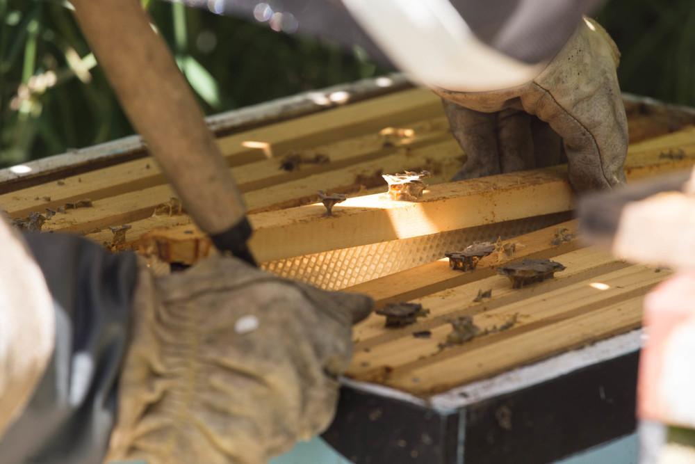 © Detours Magazine . apiculture