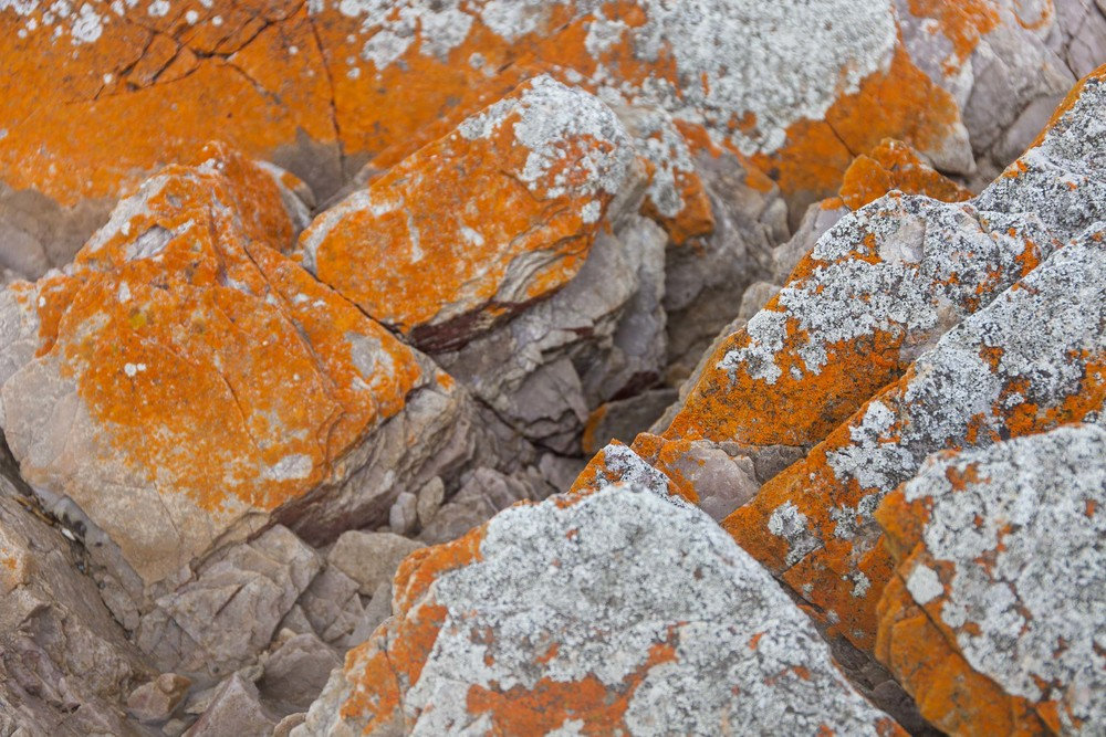 © Détours Magazine . Tasmanie, Australie . Rocky Cape National Park
