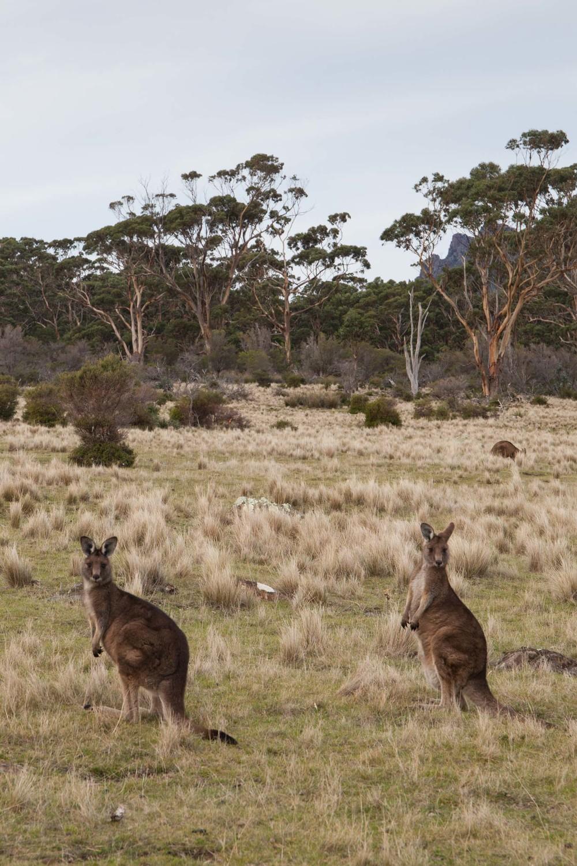 © Détours Magazine . Tasmanie, Australie . Maria Island