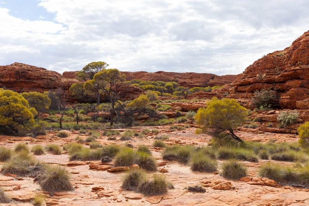 © Détours . Red Center, Australie . Watarrka National Park . Kings Canyon