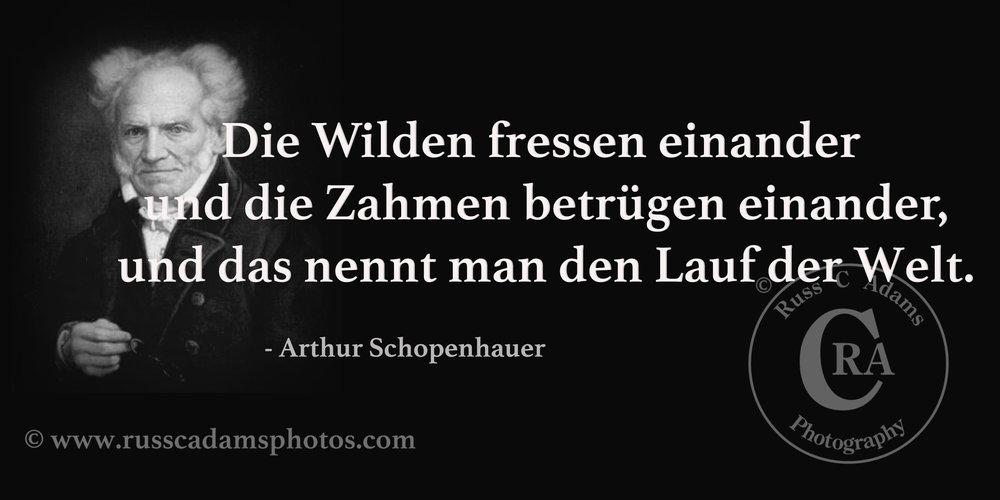 Schopenhauer-Zitate-Geburtstag.jpg