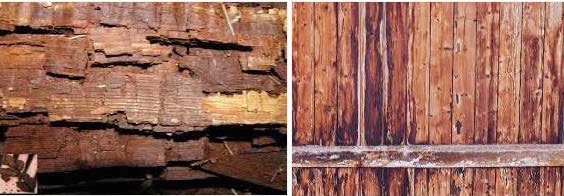 Photo 1 - Image on the left illustrates advanced wood decay with cubical pattern and complete decomposition. the image on the right shows intermediate wood decay with evident changes in wood color and fungal growth on the surfaces of some pieces.