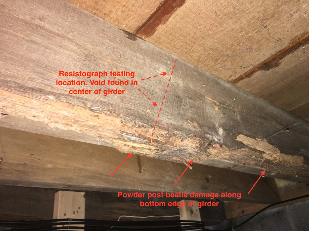 Photo 3 - First level girder with powder post beetle damage on the surface. Resistograph testing indicated a void in the center of this element at the mid-span in the center of the basement which was later found to be the result of termites and wood decay (see photo 4).