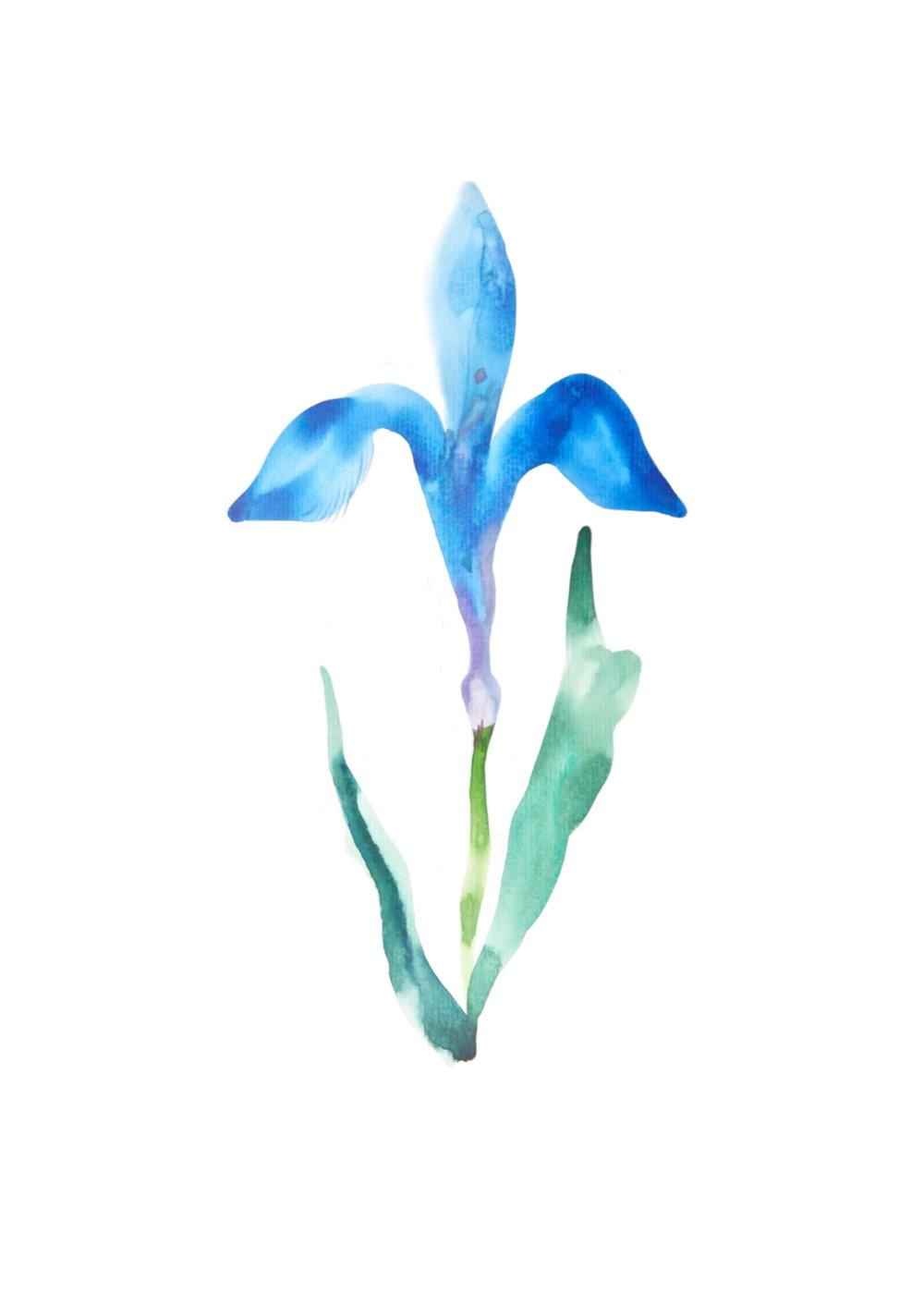 Fleur de lys  ,2016,watercolor on paper,30x40cm, private collection