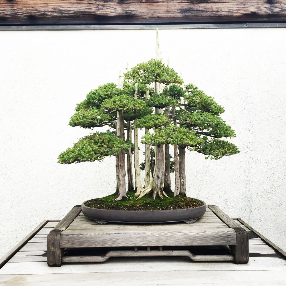 Bonsai Exhibit | Traveling Newbies