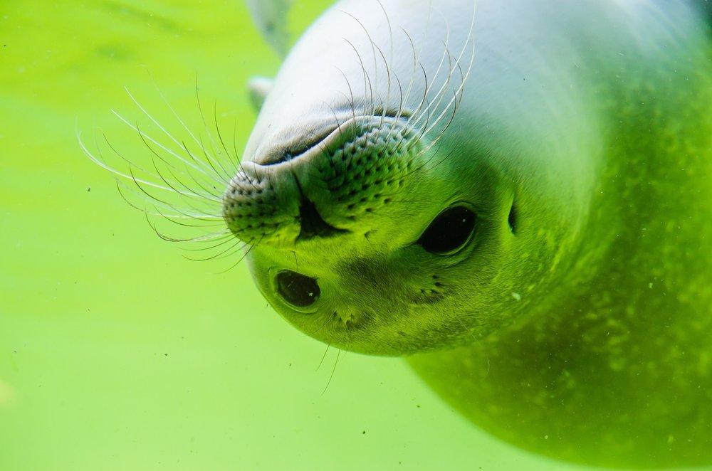 A seal up close