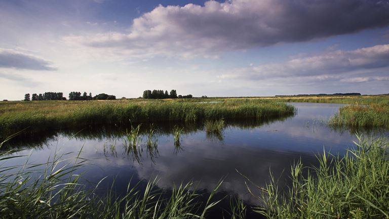Source: https://www.rspb.org.uk/reserves-and-events/reserves-a-z/lakenheath-fen