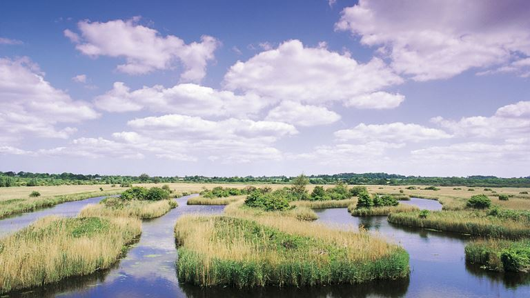 Source: https://www.rspb.org.uk/reserves-and-events/reserves-a-z/strumpshaw-fen