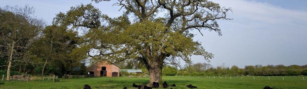 Foxburrow Farm, Woodbridge -  Source