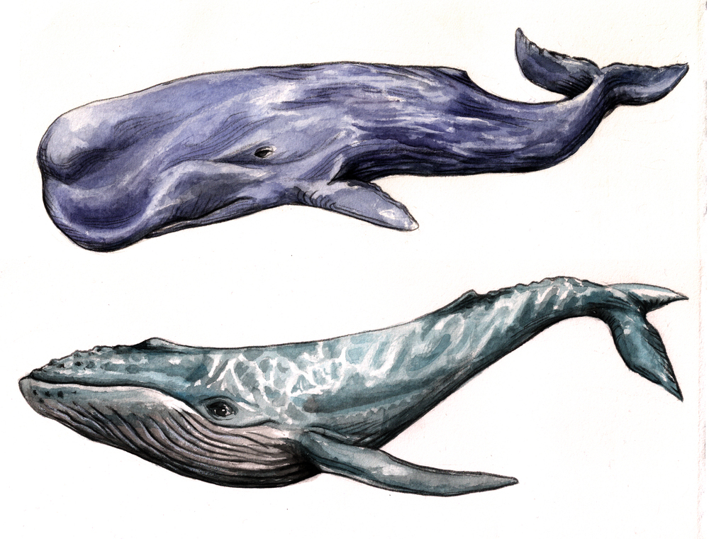 Whales fabric design
