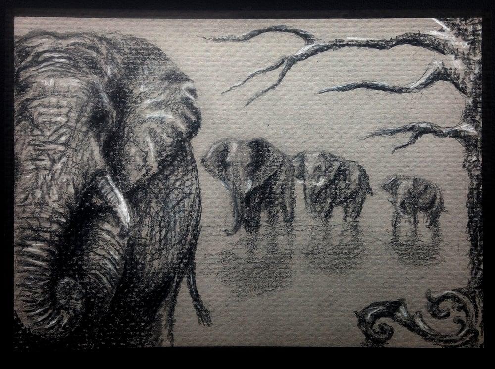 elephants 01.jpg