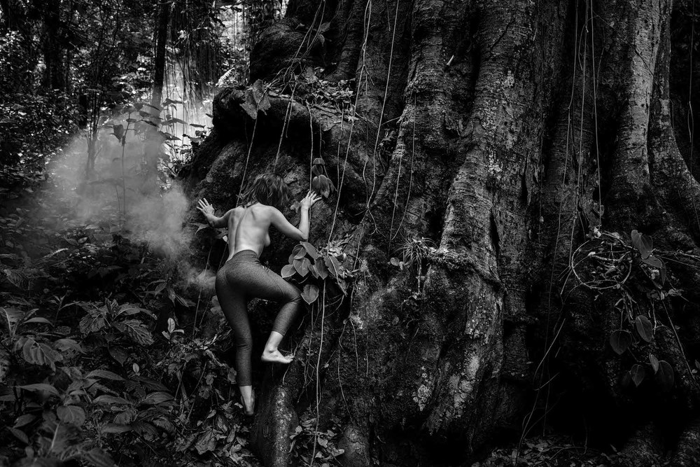 jungleweb.jpg