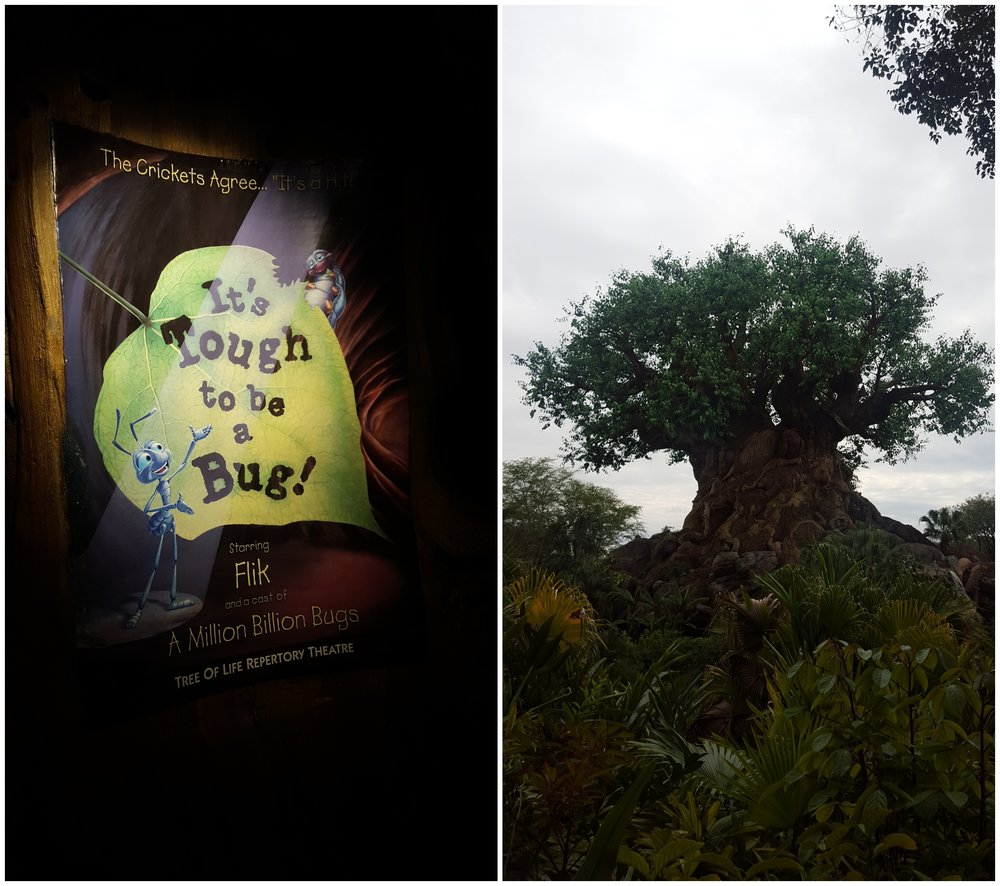 I never miss the 3D shows at Disney. I don't care how many times I've seen them I still love them all. If you haven't seen It's Tough to be a Bug, you must put it on your to do list. It's located inside the Tree Of Life. Very cool!