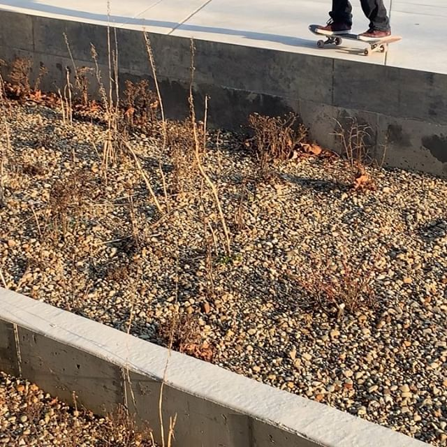Saturday morning half cab noseslide double dribble swerve to slasher smith on sidewalk. 🎥: @amber.gedman & @harrylurker