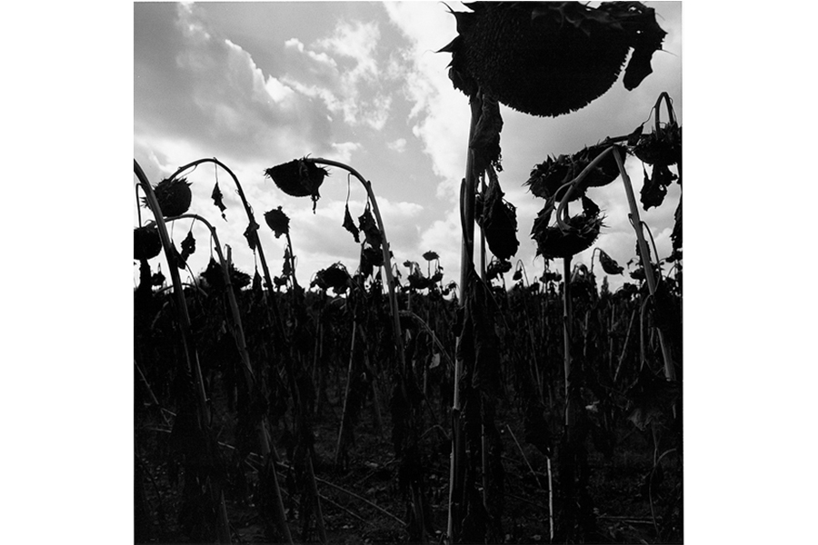 GracielaIturbide3.jpg