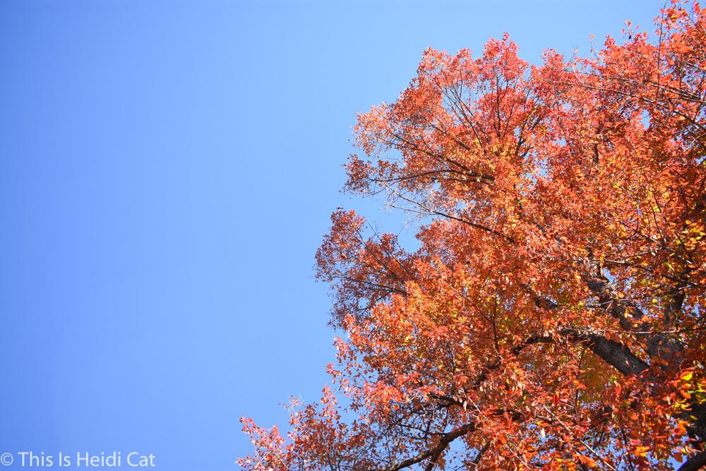Virginia_Foliage-2.jpg