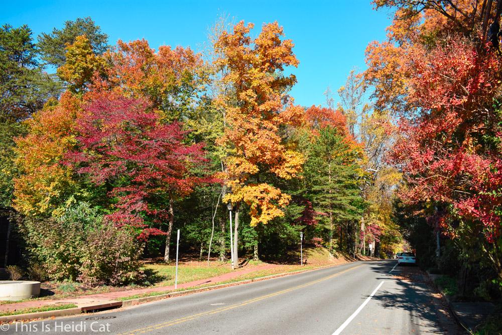 Virginia_Foliage-3.jpg