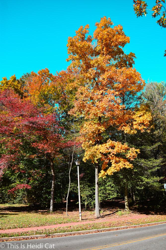 Virginia_Foliage-4.jpg