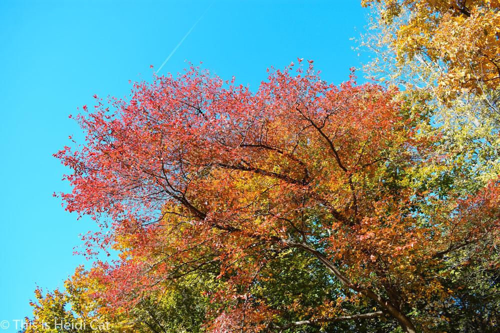 Virginia_Foliage-5.jpg