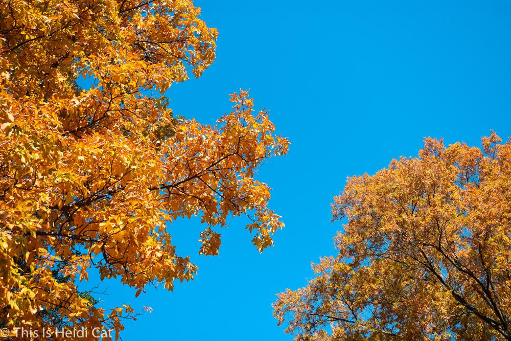 Virginia_Foliage-6.jpg
