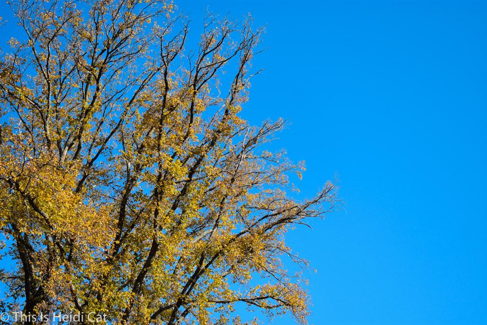 Virginia_Foliage-7.jpg