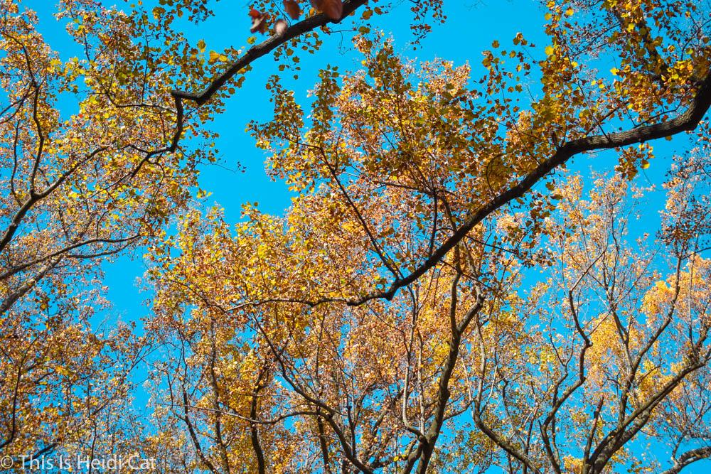 Virginia_Foliage-8.jpg