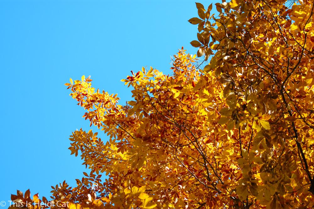 Virginia_Foliage-9.jpg