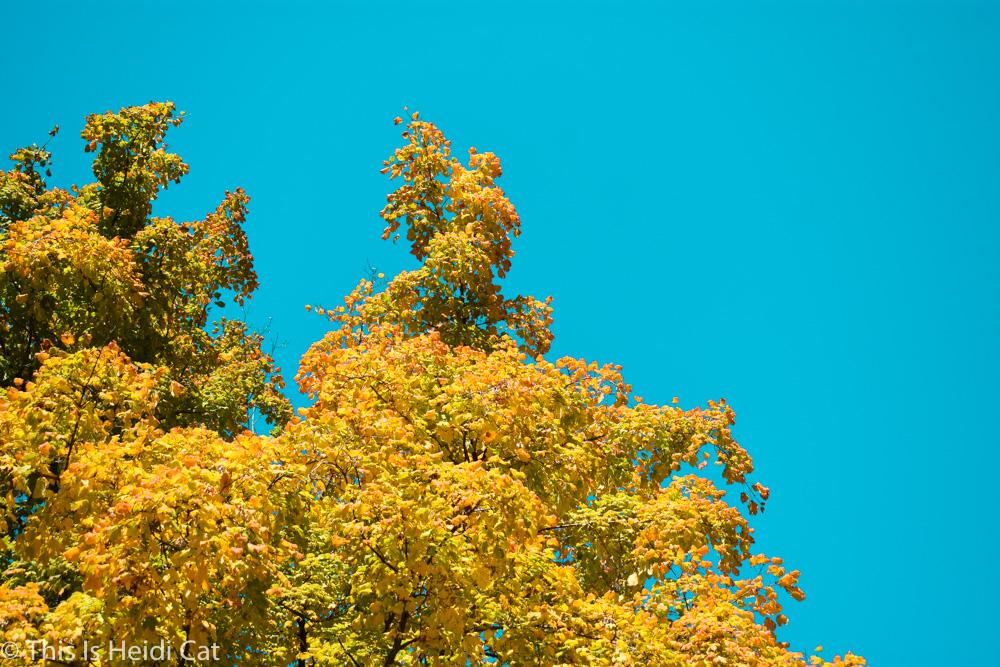Virginia_Foliage-10.jpg