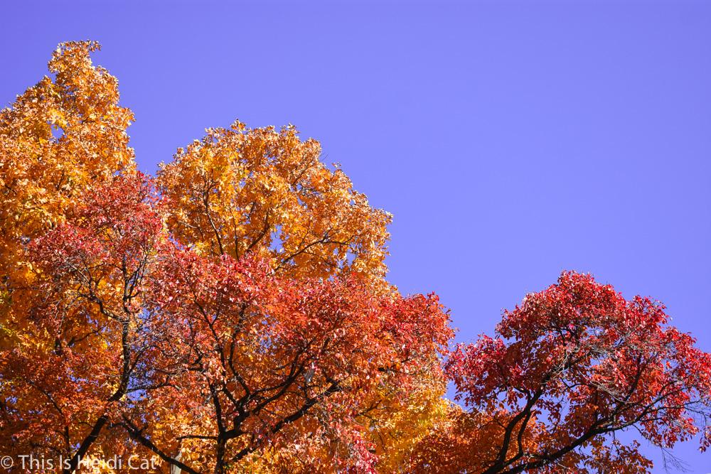 Virginia_Foliage-11.jpg
