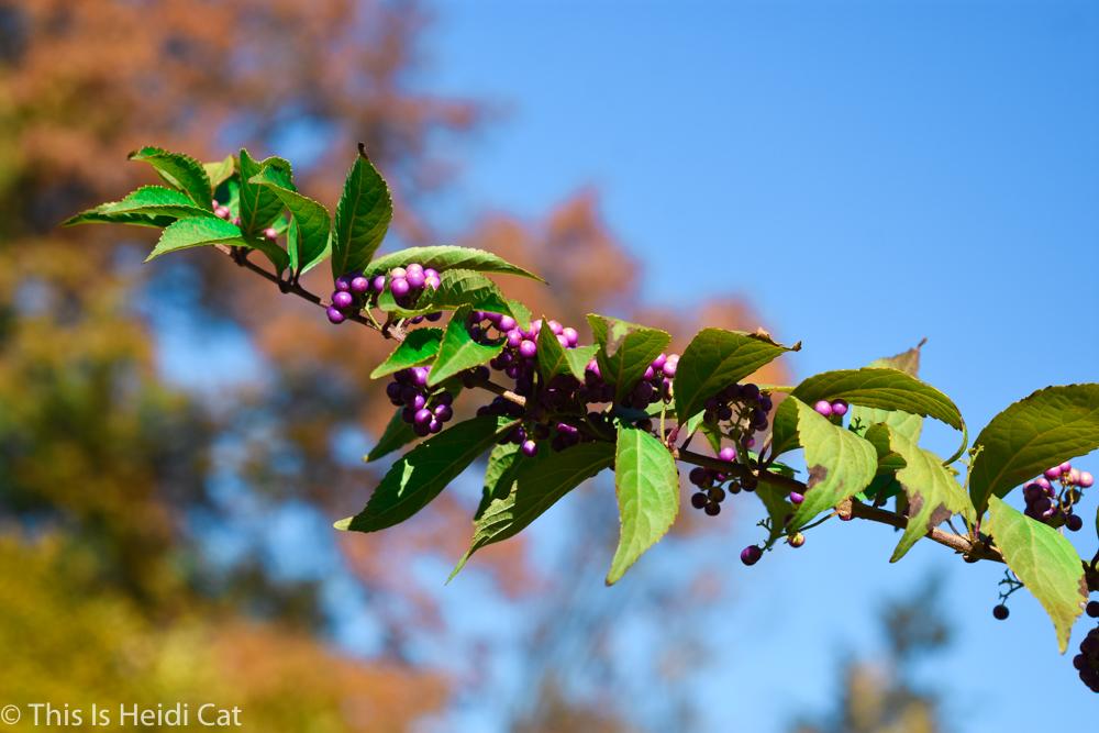 Virginia_Foliage-12.jpg