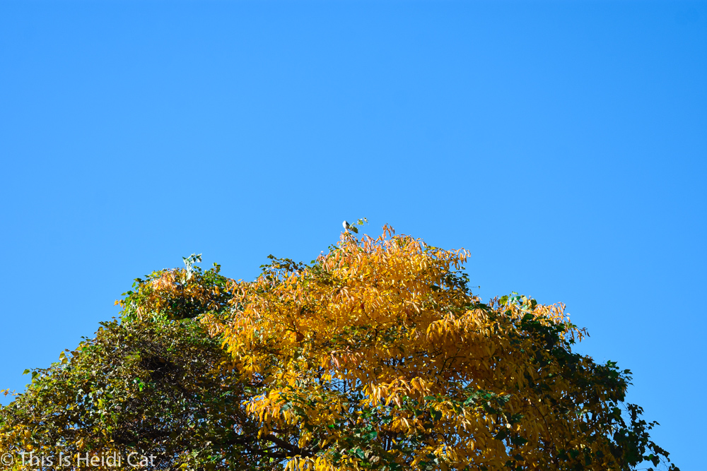 Virginia_Foliage-13.jpg