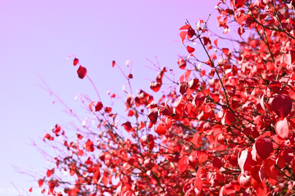 Virginia_Foliage-14.jpg
