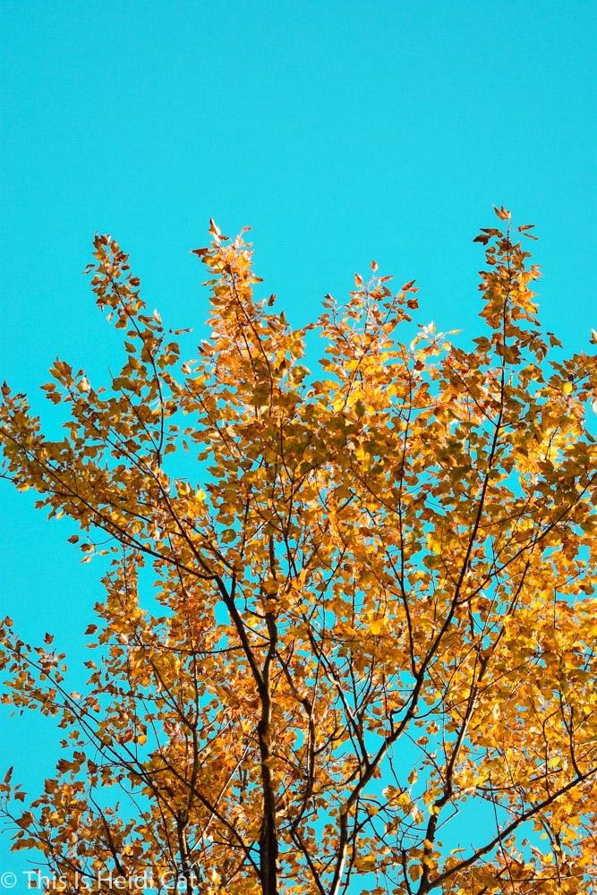 Virginia_Foliage.jpg