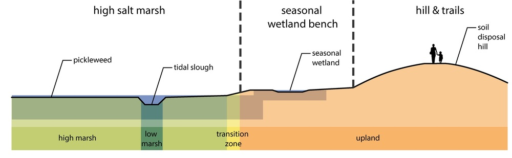 Figure 1. WRA's cross-sections illustrate the spatial relationships between the future SF Bay Trail and the newly created tidal marsh.