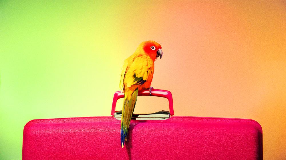 06_Pets_Bird_362.jpg