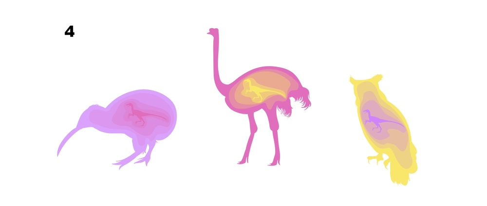 Bird Evolution - Samantha Dempsey