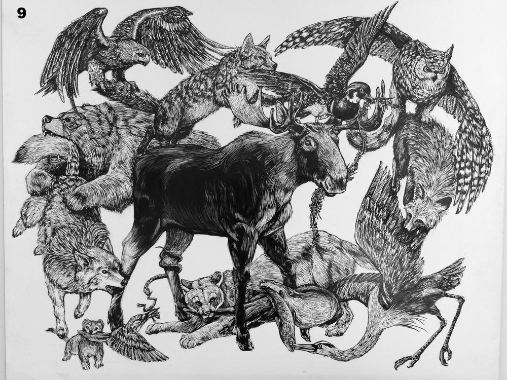 Predator-Prey Biodiversity