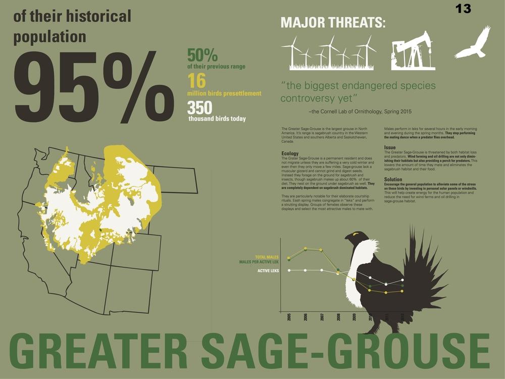 Greater Sage Grouse Facts - Savanna Sturm