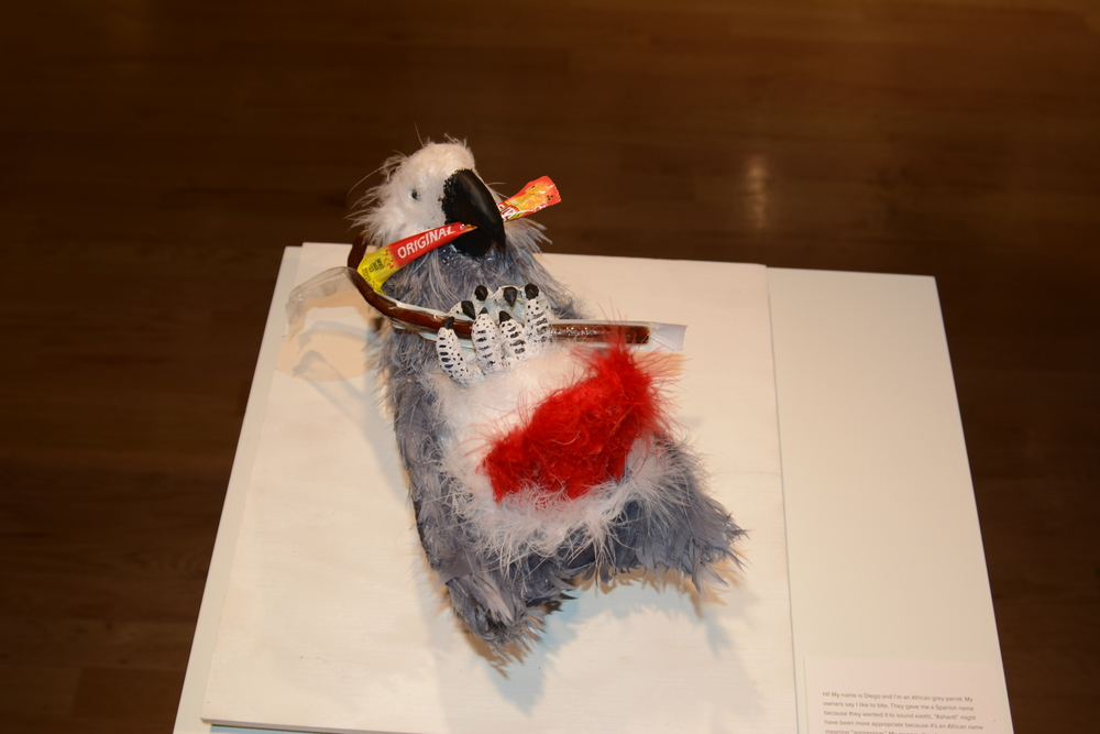 Rose Scully Diego Eating a Slim Jim Sculpture: Mixed materials, 10 x 8 x 10 in. Please take a stand for the African Grey Parrot, if not for those of us already caged as pets, then for those who are left in the wild.