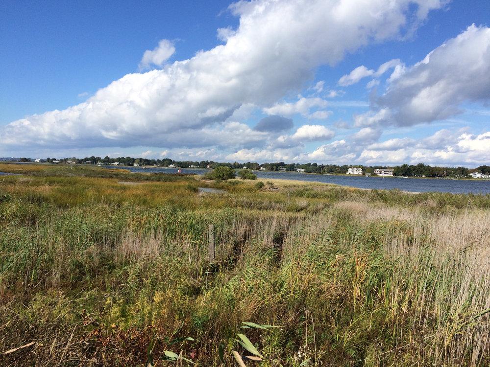Jacobs Point salt marsh 7.25.15.JPG