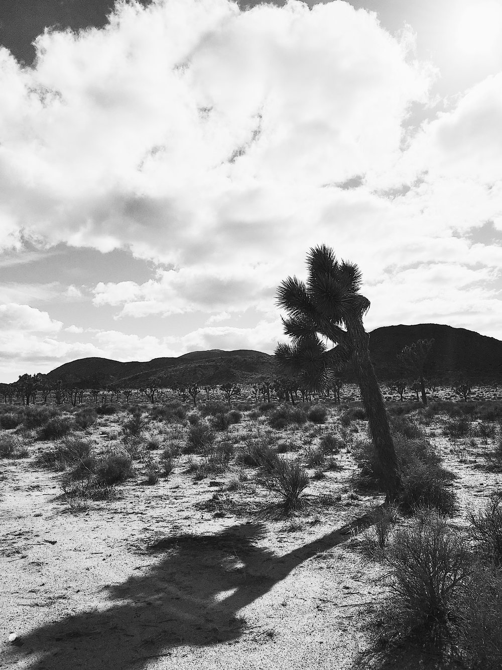 Joshua-Tree-National-Park-Mary-Kate-Steele-Photography
