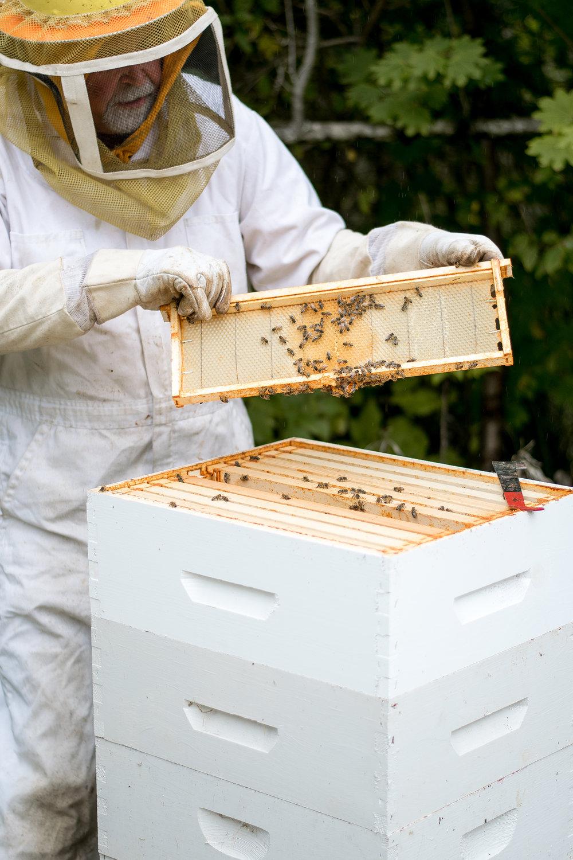 Fall Honey Harvest   All Purpose Flour Child