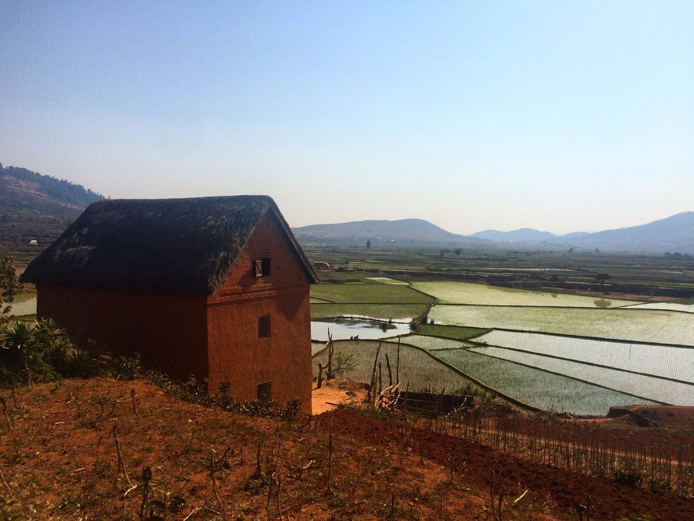 A rice paddy in Sandrandahy in the Highlands of Madagascar.