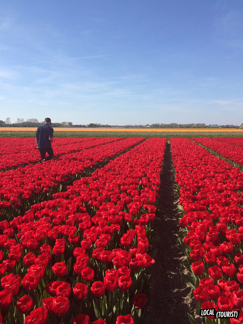 Lisse, Holland / img via Local (Tourist)
